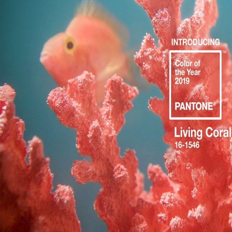 Living Color: The 2019 Color of the Year